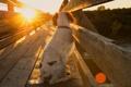 Картинка свет, мост, собака
