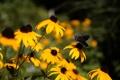 Картинка желтые, бабочка, лепестки, цветы