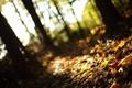 Картинка лес, осень, трава, размытость, листья, деревья, природа