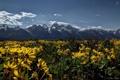 Картинка цветы, луг, Вайоминг, Wyoming, Гранд-Титон, Grand Teton National Park, Скалистые горы