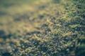 Картинка трава, макро, земля