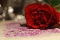 Картинка цветок, поверхность, блеск, роза, красная