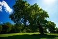 Картинка лес, трава, солнце, природа, фото, дерево, поляна