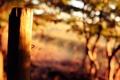 Картинка солнце, свет, деревья, свежесть, природа, листва, утро