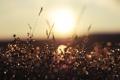 Картинка трава, солнце, капли, природа, игра