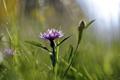 Картинка цветок, лето, природа