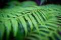 Картинка зелень, лес, лист, растение, папоротник, Australia, New South Wales