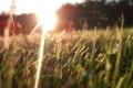 Картинка трава, природа, Макро, солнечные лучи