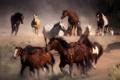 Картинка пыль, лошади, бег, табун