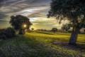 Картинка поле, свет, деревья, утро
