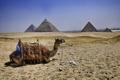 Картинка верблюд, Египет, пирамиды