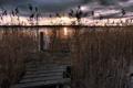Картинка мост, озеро, камыш