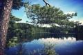 Картинка лес, сосна, озеро, вода