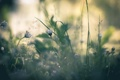 Картинка трава, природа, фон