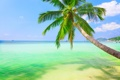 Картинка landscape, пейзаж, nature, sky, небо, coconut palm, облака
