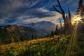 Картинка закат, горы, Mount Rainier National Park, цветы