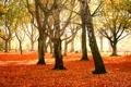 Картинка парки, листопад, осенние обои, осень, дерево, листья, деревья