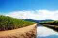 Картинка зелень, вода, канал, сахарный тростник, поля, Sugarcane Fields