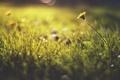 Картинка поле, трава, цветы, стебель