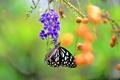 Картинка цветок, ягоды, бабочка, ветка