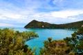 Картинка Новая Зеландия, Tasman National Park, побережье, кусты, море