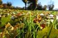 Картинка Макро, Трава, Осень, Листья