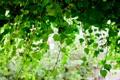 Картинка зелень, листья, дерево, ветви, ниспадают