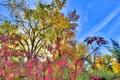 Картинка осень, небо, листья, облака, деревья, кусты
