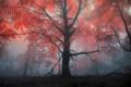 Картинка осень, лес, деревья, туман, дерево, вечер, утро