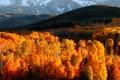 Картинка осень, лес, горы