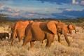 Картинка небо, горы, африка, слоны
