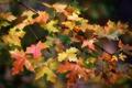 Картинка листья, капли, осень, цвета, ветка, макро