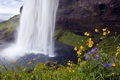 Картинка природа, цветы, лето, водопад