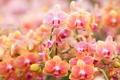 Картинка цветы, орхидеи, цветение, flowers, orchids, flowering