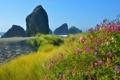 Картинка море, пейзаж, цветы, скалы