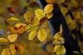 Картинка листья, ветки, ярко, ствол, жёлтые, конец лета, дерево