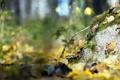 Картинка осень, макро, природа