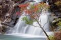 Картинка листья, водопад, осень, скалы, дерево