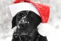 Картинка взгляд, друг, собака, шапочка