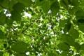 Картинка листья, свет, деревья, ветки, природа, фон, зелёные