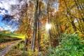 Картинка осень, листья, деревья, лучи солнца, тропинка, кусты