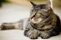 Картинка кот, хищник, взгляд