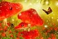 Картинка цветы, бабочка, гриб, сказка