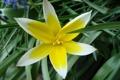 Картинка белый, цветок, желтый