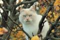 Картинка кошка, кот, ветки, дерево