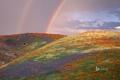 Картинка небо, цветы, холмы, маки, радуга, луг, Калифорния