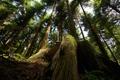 Картинка лес, природа, корни, тени