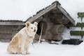 Картинка друг, снег, взгляд, собака