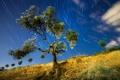 Картинка небо, пейзаж, дерево