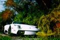 Картинка природа, Lamborghini, белая, Murciélago
